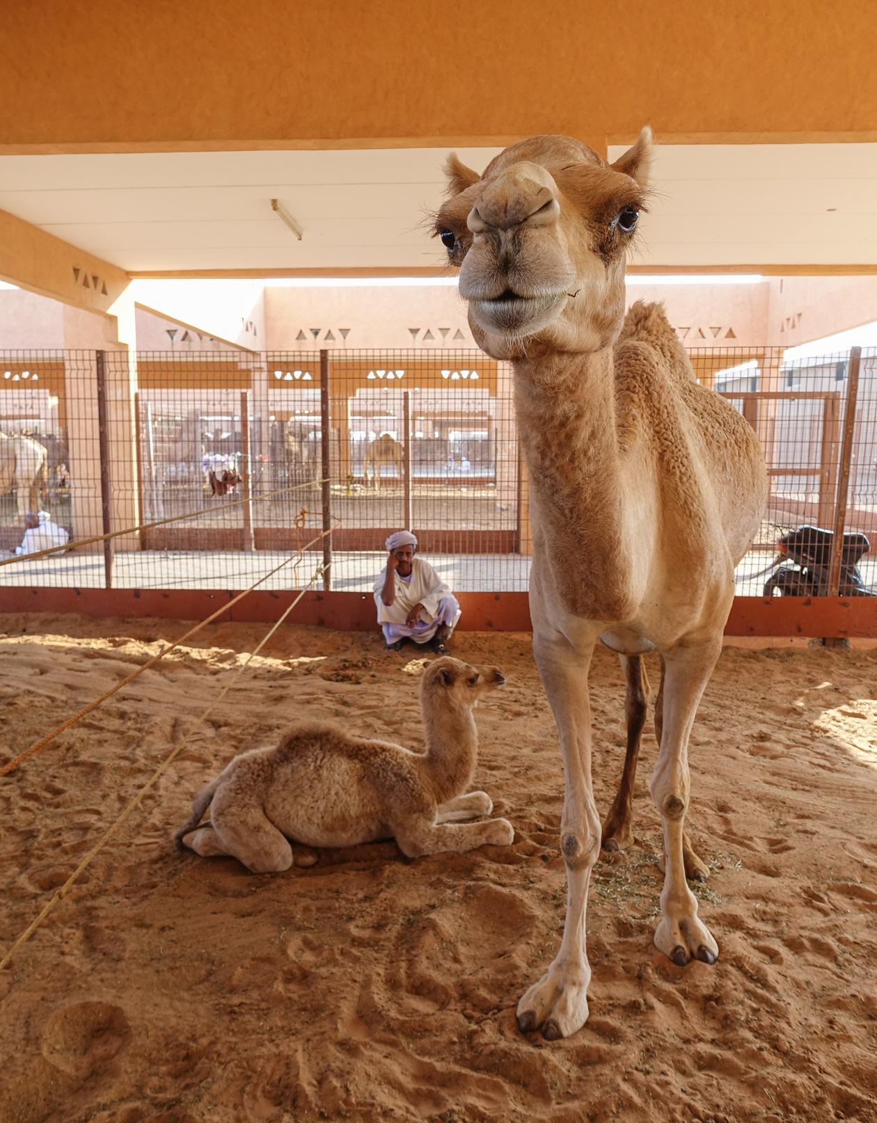 al-ain-0810-kamelenmarkt