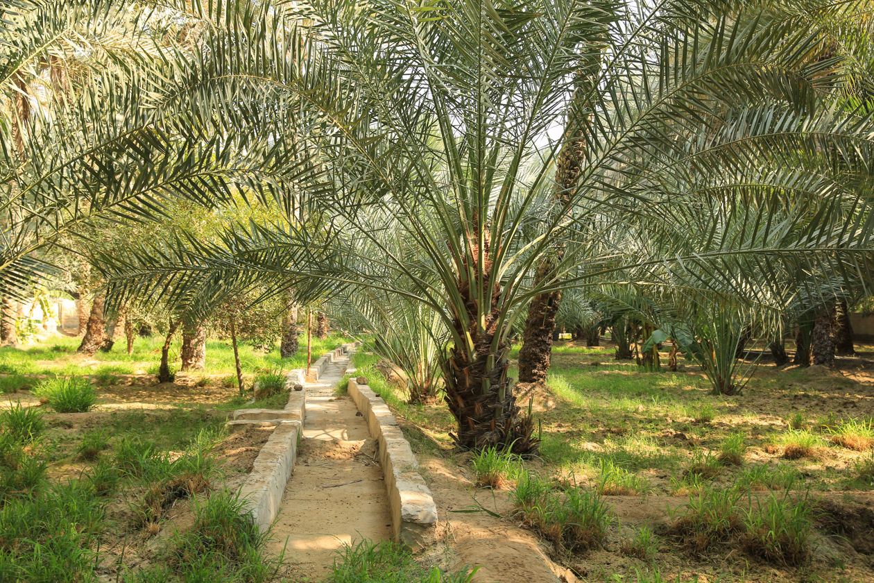al-ain-1300-al-ain-oase