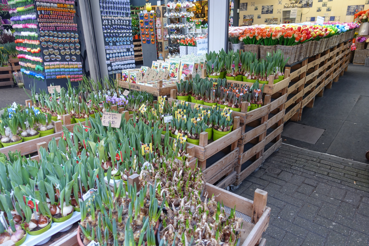 amsterdam-1545-tulpen-uit-amsterdam