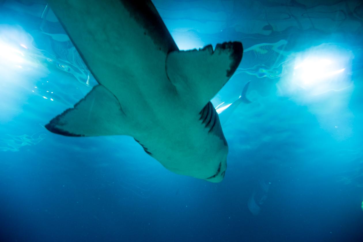 oceanos-y-tiburones