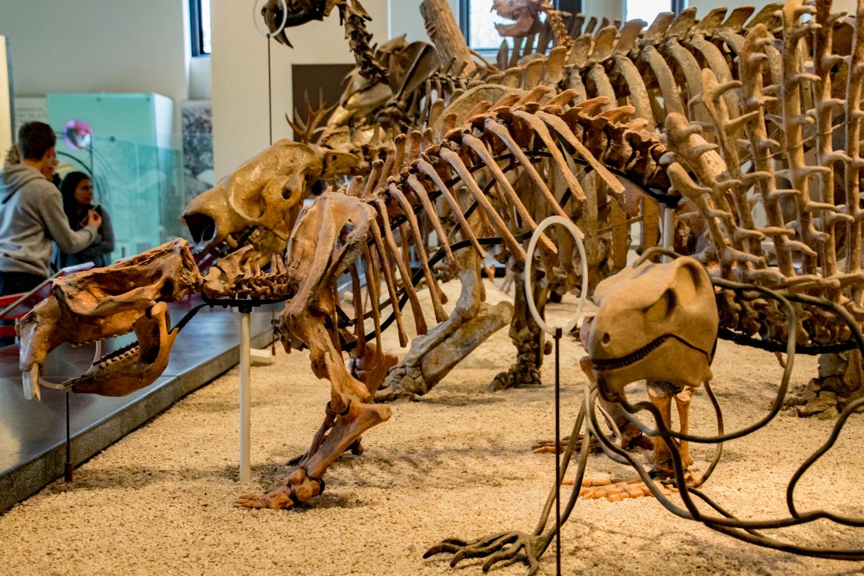 natural-history-dinos