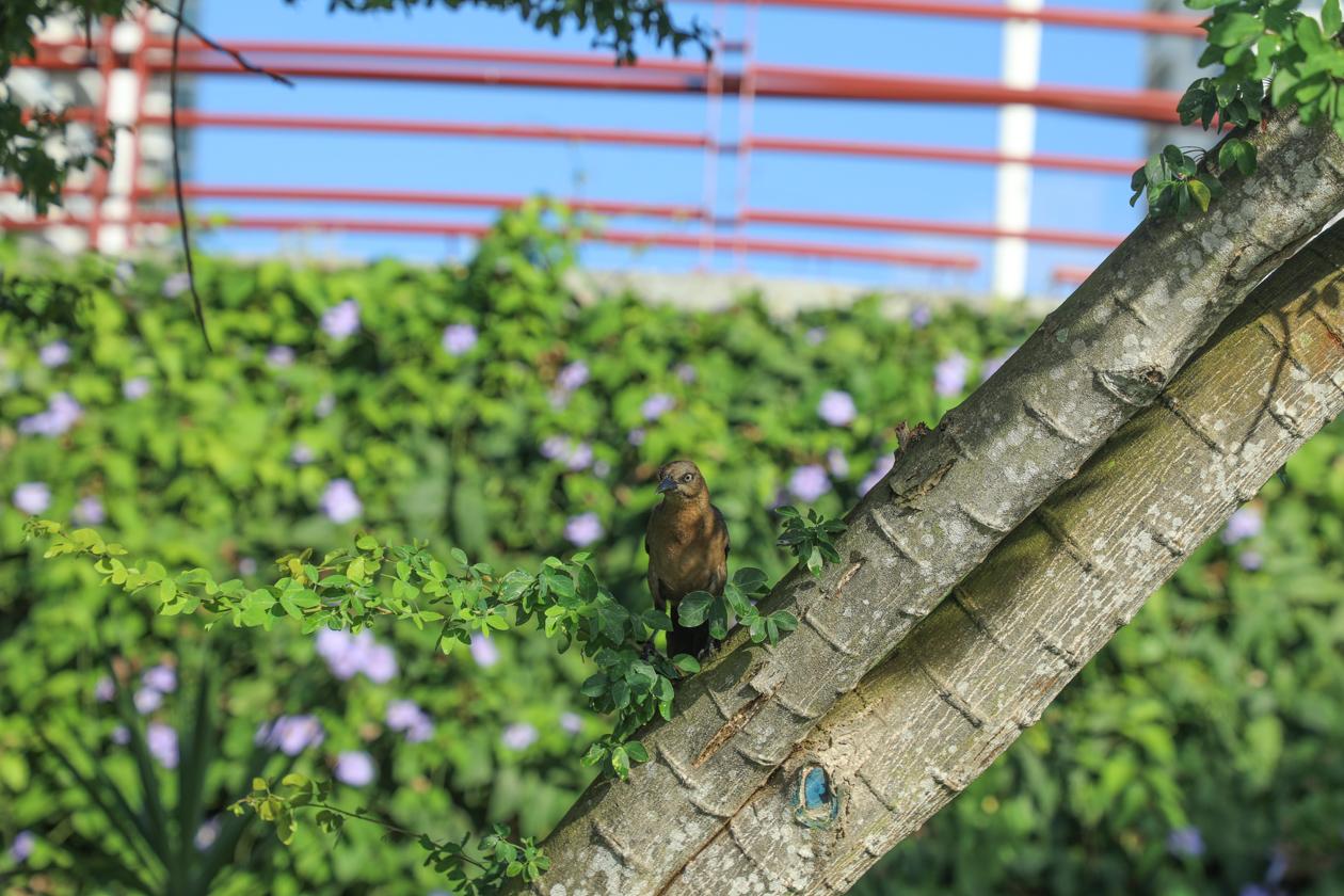 vogel in het groen